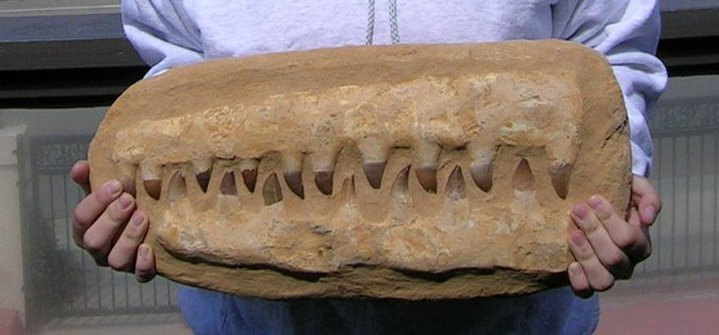 Dinosaur jawbone with teeth
